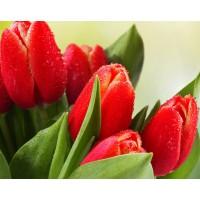 Червени лалета- диамантен гоблен FL 45075