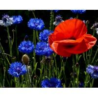 Летни Цветя - Диамантен гоблен - FL 45088