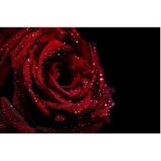 2013 Диамантен гоблен Черна роза