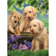 Картина по номера - Кучета и пеперуди ZG-0311