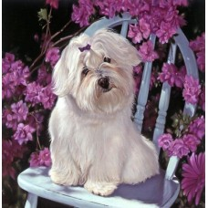 Картина по номера - Куче в цветя  ZP-096