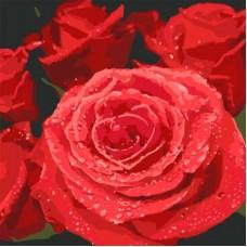 Картина по номера - Рози  ZP-114