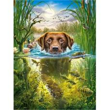 Картина по номера - Куче и риба  ZE-3168