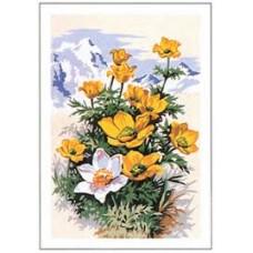 Рисуване по номера - цветя. СХ 3775