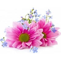 Розови гербери- Диамантен гоблен FL 34064