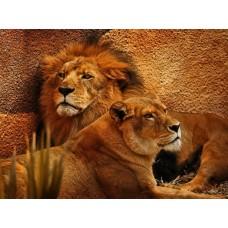 34097 Диамантен гоблен - Влюбени  лъвове
