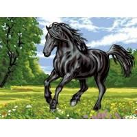 Комплект за рисуване по номера -Черен кон ЕХ 5267