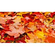 PZ 7040 Есенни листа