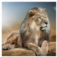 GI 303048  Диамантен гоблен -Лъв