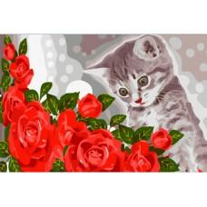 котенце с рози