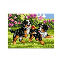 Игриви кучета  EX 5264