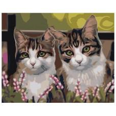 Картина по номера -  Котки  ZG-0059