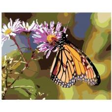 Картина по номера - Пеперуда ZG-0209