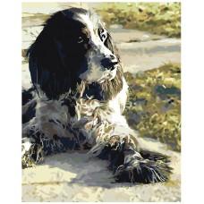 Картина по номера - Куче ZG-0231