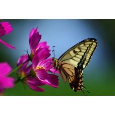 FL 304102 Пеперуда и лилави цветя - Диамантен гоблен