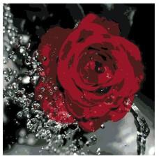 Картина по номера - Роза  ZP-014
