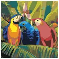 Картина по номера - Три папагала  ZP-001