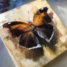 Картина по номера - Пеперуда  ZP-057