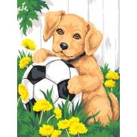 Куче с топка - Картина по номера CX 3500
