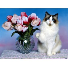 Котка и лалета - Картина по номера - EX 5024