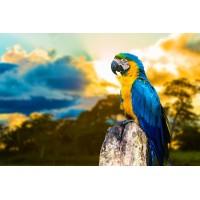 GI 304161 Замислен папагал - Диамантен гоблен