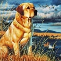Куче край реката - диамантен гоблен GI 404002