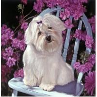 Бяло куче - диамантен гоблен GI 404003